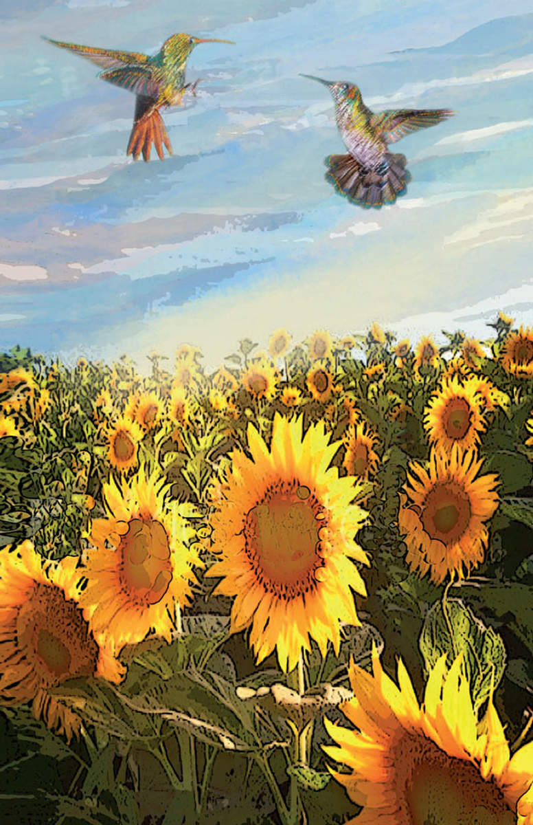 Sunflower Field by Ushana